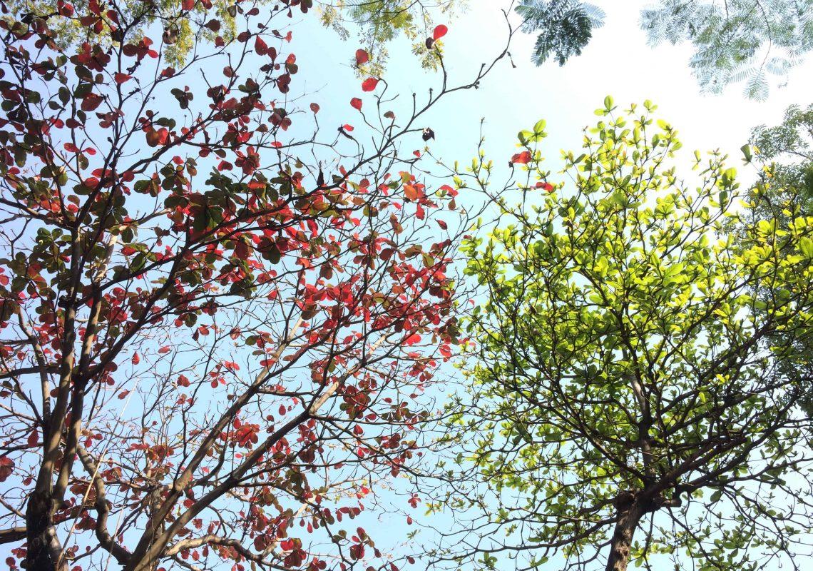 branch-bright-color-668553